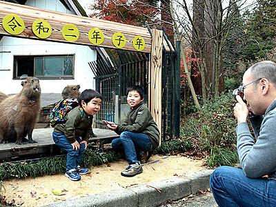 カピバラと撮影、年賀状写真にいかが 富山市ファミリーパーク