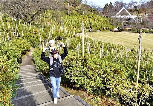 ツツジに雪つりが施され、一面に幾何学模様が広がった鯖江市西山公園=福井県鯖江市桜町3丁目