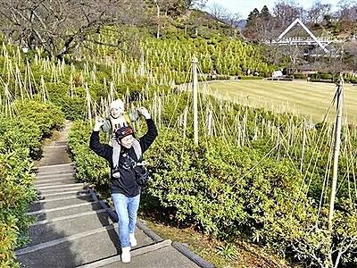 鯖江・西山公園 名物ツツジに、雪つりのとんがり帽子