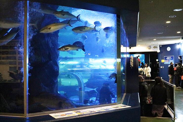 照明を暗めの青色に変更した富山湾大水槽