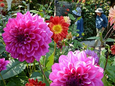 英国王立園芸協会のパートナーガーデンに 茅野の英国式庭園、アジア初