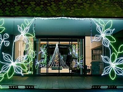旧宮崎村花「ヤマボウシ」 光で表現 福井県越前町