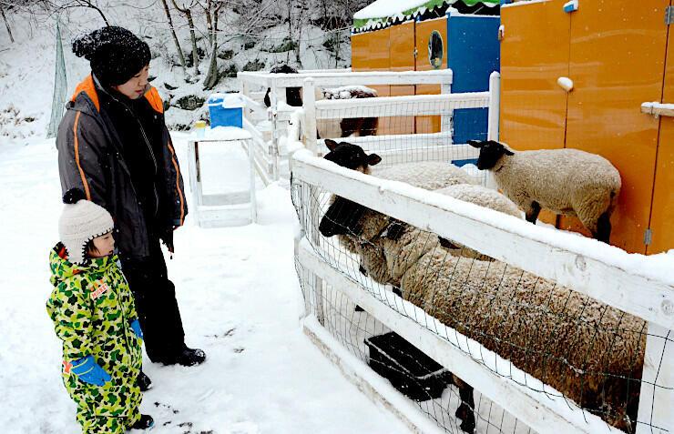雪の中で約10種類の動物と触れ合える「冬のふれあい動物広場」