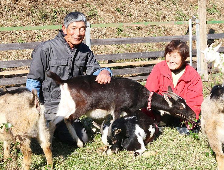 かわいいヤギに囲まれ、笑顔を見せる村江さん(左)と清美さん