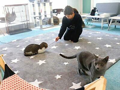 五泉に猫カフェ 遊びに来てニャン