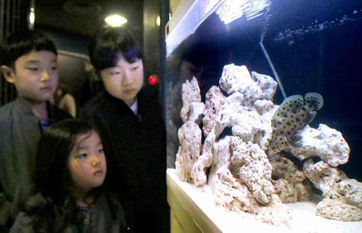 寺泊水族博物館で展示されているネズミハタ=30日、長岡市