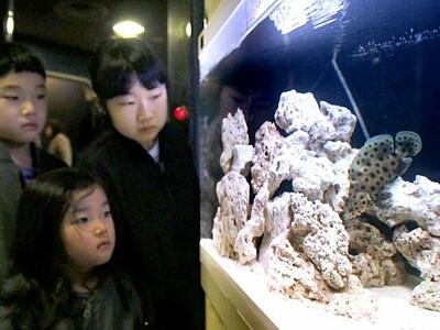 ネズミ悠々と泳ぐ 子年にちなみ展示 長岡・寺泊水族館