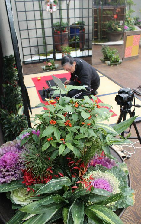 縁起物の植物などを紹介する「新春展」=9日、新潟市秋葉区