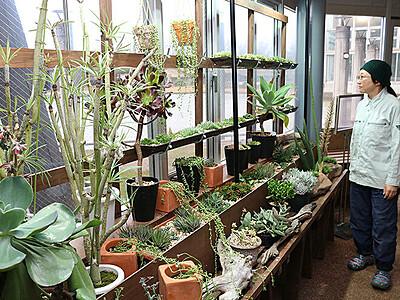 多肉植物の楽しみ方提案 県中央植物園、コーナー常設
