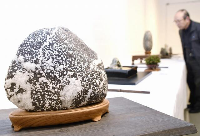 美しい模様の石が並ぶ愛石展=1月17日、福井県福井市の県立美術館