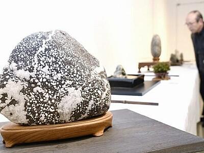 ユニークな模様の石や岩30点を展示 福井県立美術館