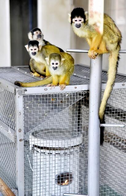 ストーブに集まるボリビアリスザル=福井県鯖江市西山動物園