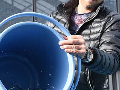 稚アユ出荷「いい育ち具合」 県水産試験場諏訪支場
