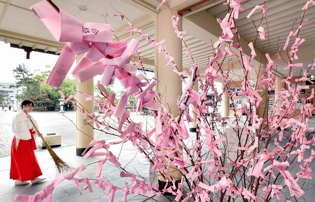 受験に合格した感謝の気持ちなどがつづられた短冊が枝に結ばれている「合格桜」=1月28日、福井県福井市の県護国神社