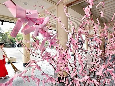 志望校と縁結び 福井の神社に「合格桜」咲く
