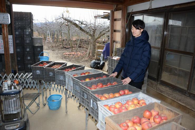 作業小屋で客に配送するリンゴを確かめる北沢さん=28日、長野市赤沼