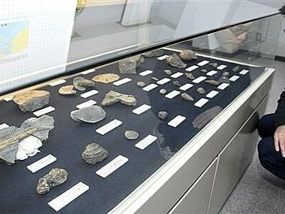 若狭高浜の郷土史たどる化石、土器を展示 閉校備品、教科書も