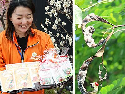 ハート形の種子大豊作 県中央植物園、グッズ作り美しさPR