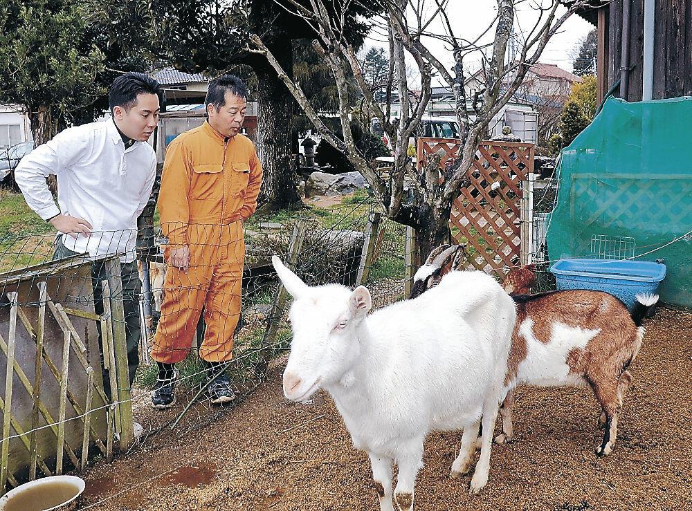 ヤギを飼育する宇谷さん(右)と山﨑さん=加賀市小塩辻町