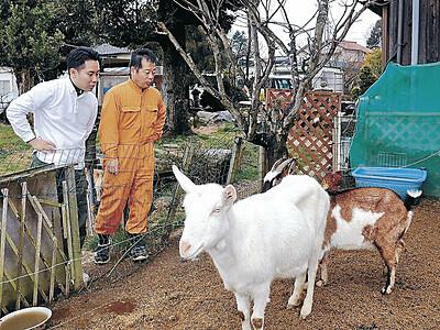 ヤギミルクで美容せっけん 加賀の牧場、院生と開発