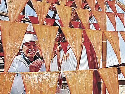 高級珍味「干しくちこ」の生産がピーク 七尾市石崎町