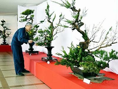 古木の枝で自然美表現、「上野古典立華」を伝承