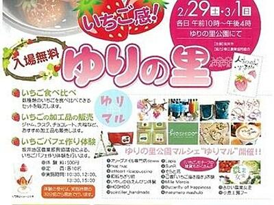 坂井・ゆりの里公園がイチゴの園に 29日催し