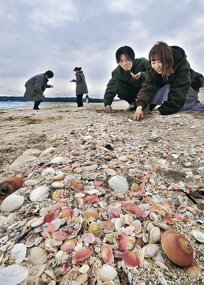 砂浜に打ち寄せられた貝殻=志賀町の増穂浦海岸