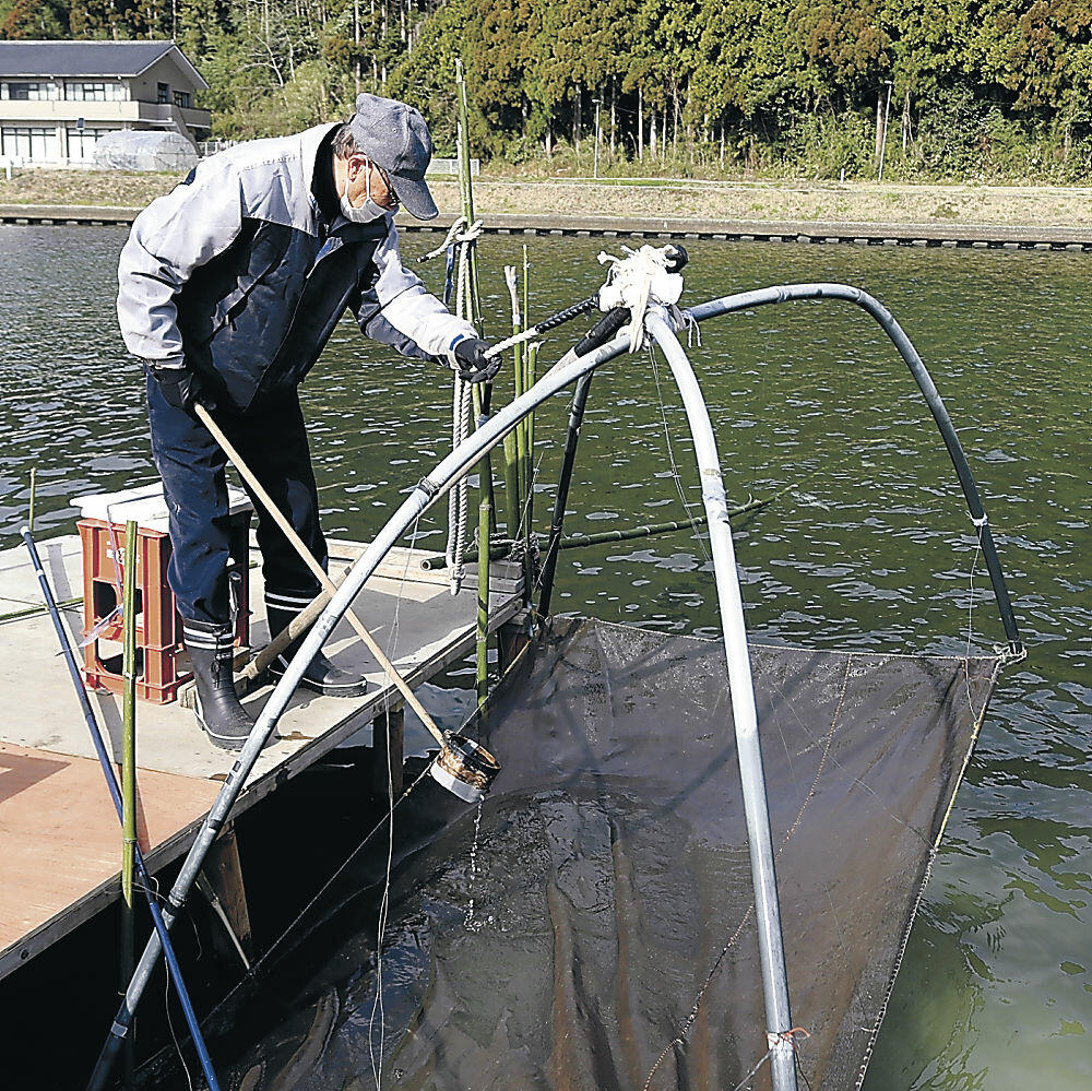 四つ手網でイサザをすくい上げる住民=穴水町川島