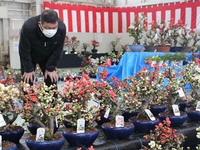 春の潤い 新潟市秋葉区小須戸 ボケ展示即売会