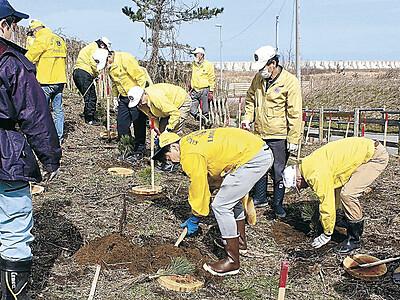 松林再生願い クロマツ植栽 市内4LC