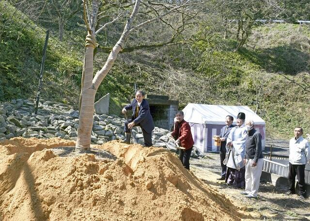 継体天皇ゆかりの桜の苗木を植える関係者=3月9日、福井県福井市足羽5丁目の「七ツ尾口」付近