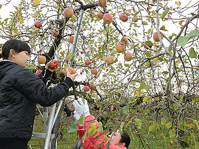 特産のリンゴの木 オーナー募集 魚津商議所女性会