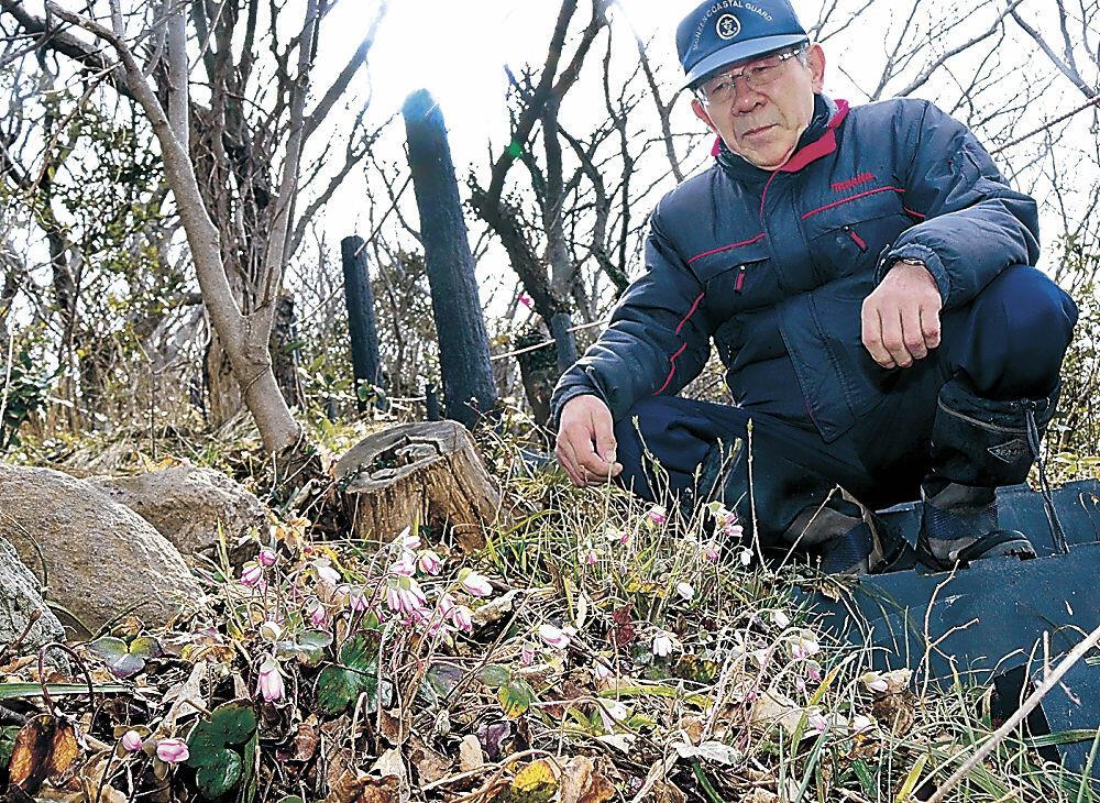 雪割草の咲き具合を確認する天井さん=輪島市門前町吉浦