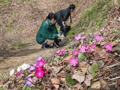 春 開演 長岡・雪国植物園