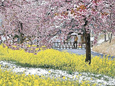 金沢に雪、「春」と競演 県内冷え込む