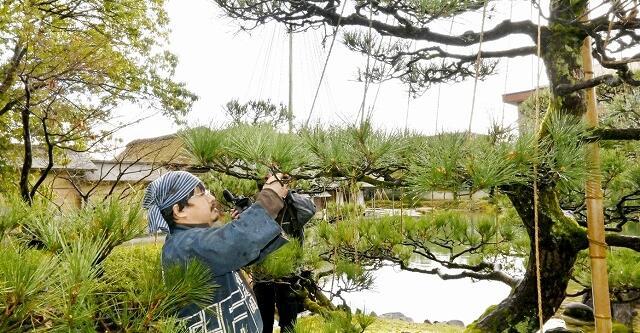 わら縄をほどく森口さん=3月16日、福井県福井市の養浩館庭園