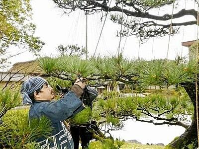 養浩館庭園の雪つり撤去 福井市、国の名勝庭園