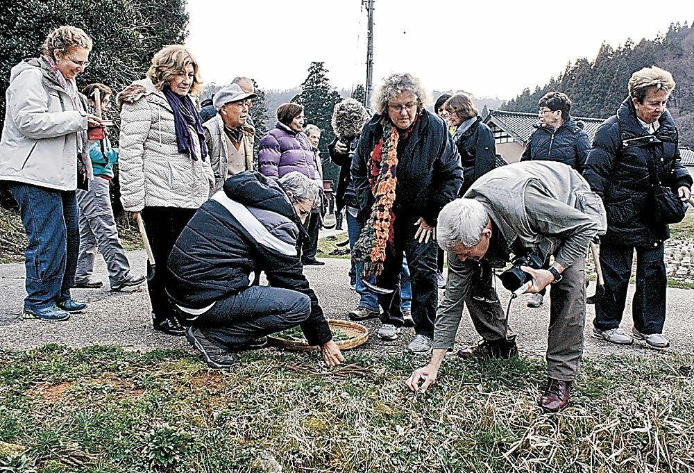 山菜取りを体験する外国人観光客=2014年、能登町