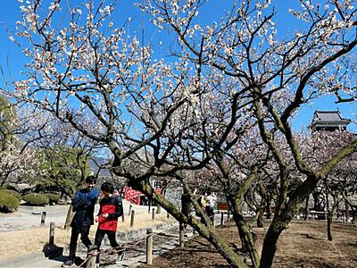松本城へいざなう春の香り 白梅・紅梅、花盛り