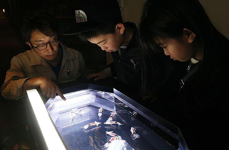 飼育員(左)からホタルイカについての説明を聞く来館者