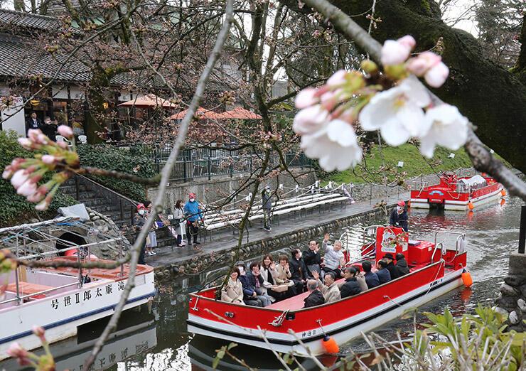 咲き始めた桜の下を進む遊覧船=富山市新総曲輪