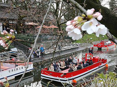 松川遊覧船運航スタート 両岸の桜ほころぶ