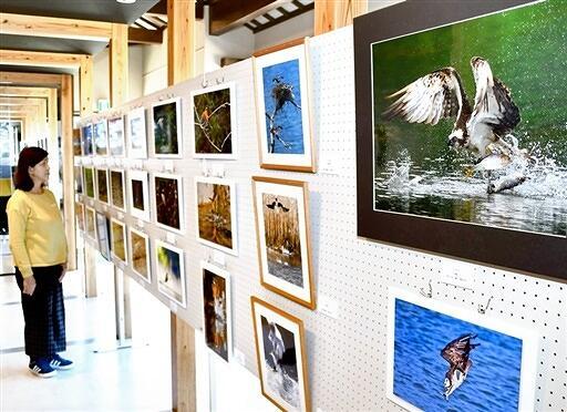 「自然と生き物たち」写真展
