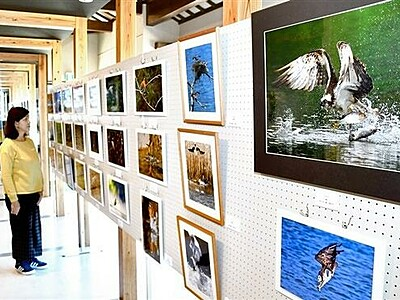 越前加賀県境の館で「自然と生き物たち」写真展