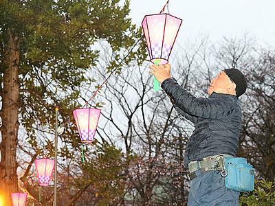 高岡古城公園にぼんぼり復活 「夜桜楽しんで」