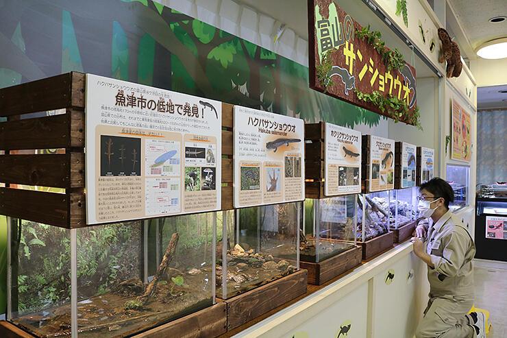 県内5種のサンショウウオを並べたコーナー