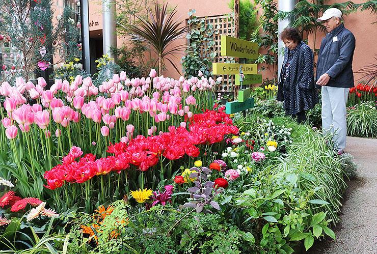 飾られた花を鑑賞する来場者=チューリップ四季彩館