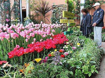 春彩る花500鉢展示 砺波・チューリップ四季彩館