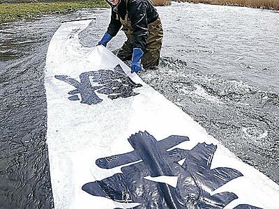 犀川で染め物のり落とし